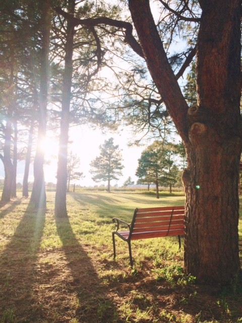 bench_light_field