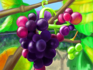 colorful grapes vines vine grape digital painting iPad procreate