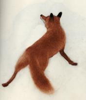 fox-Krister Eide
