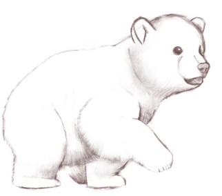 little-polar-bear