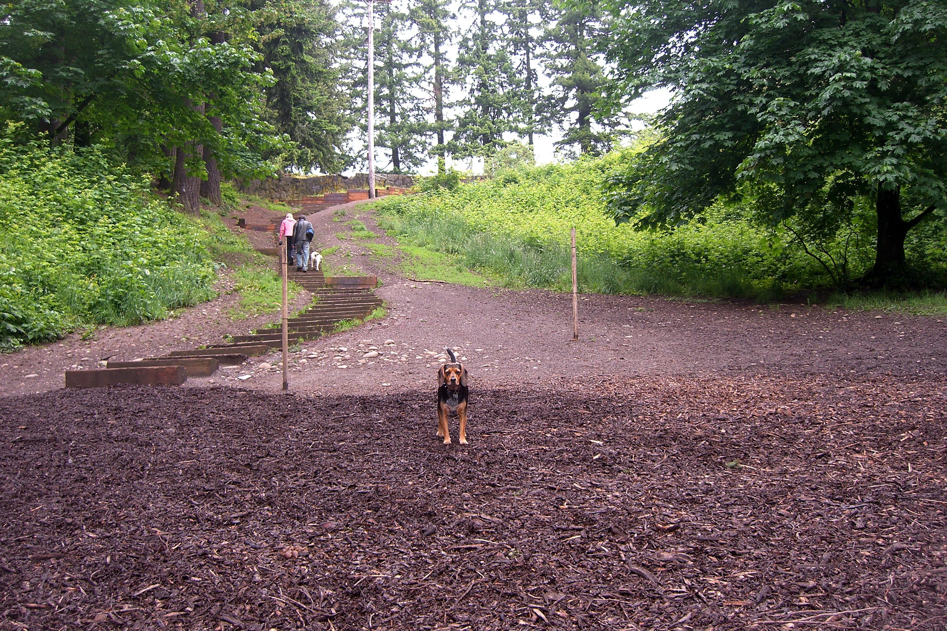 Mt Tabor Dog Park