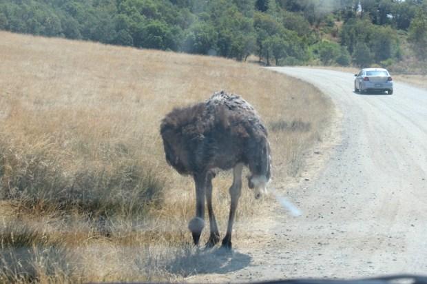 wildlife safari  17