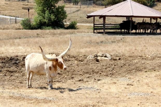 wildlife safari  13
