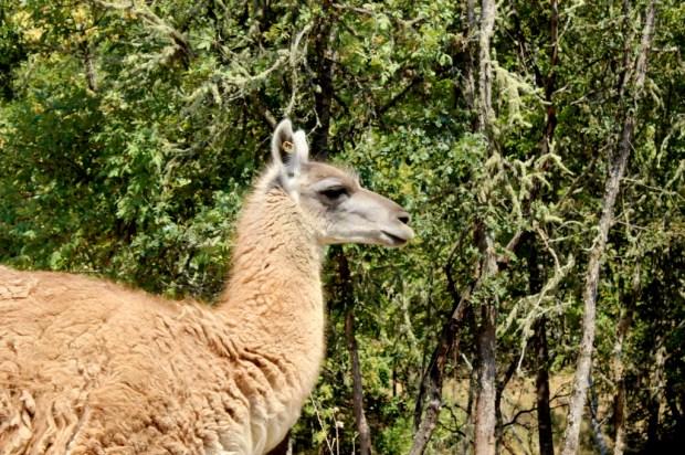 wildlife safari 10