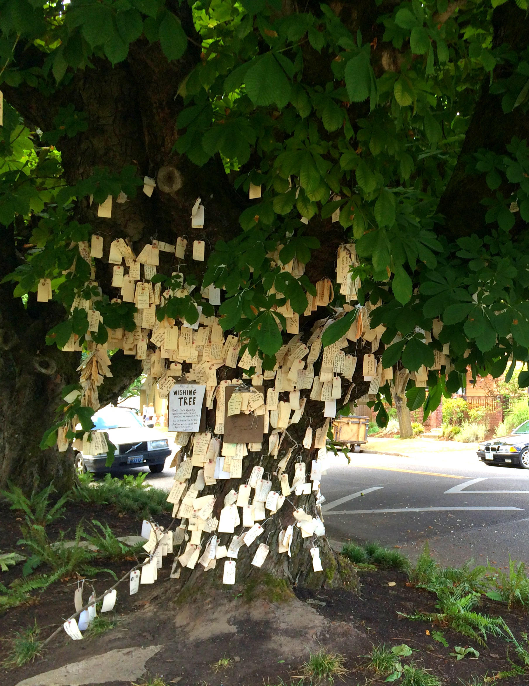 The Wishing Tree  Kristi Does PDX Adventures in Portland OR