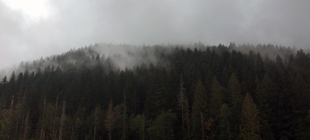 ramona-falls-foggy-view