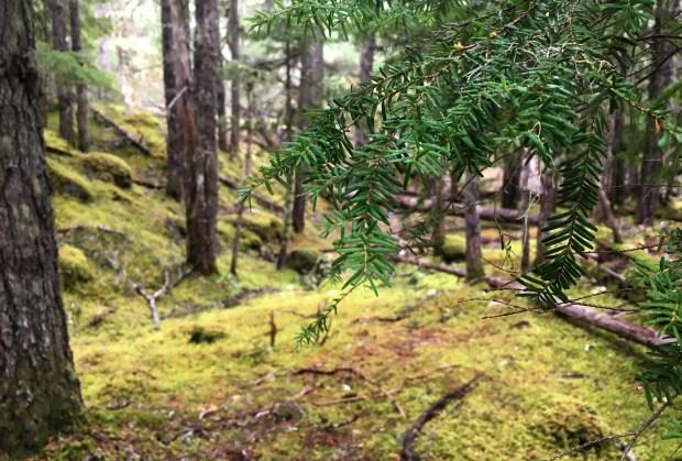 ramona-falls-mossy-forest