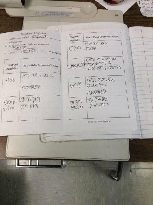small resolution of animal adaptations   Mrs. Goggans' 4th Grade Scientists