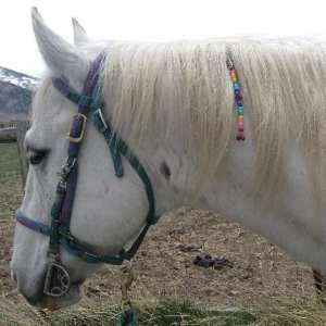 Sample Mane Dangle clipped to mane