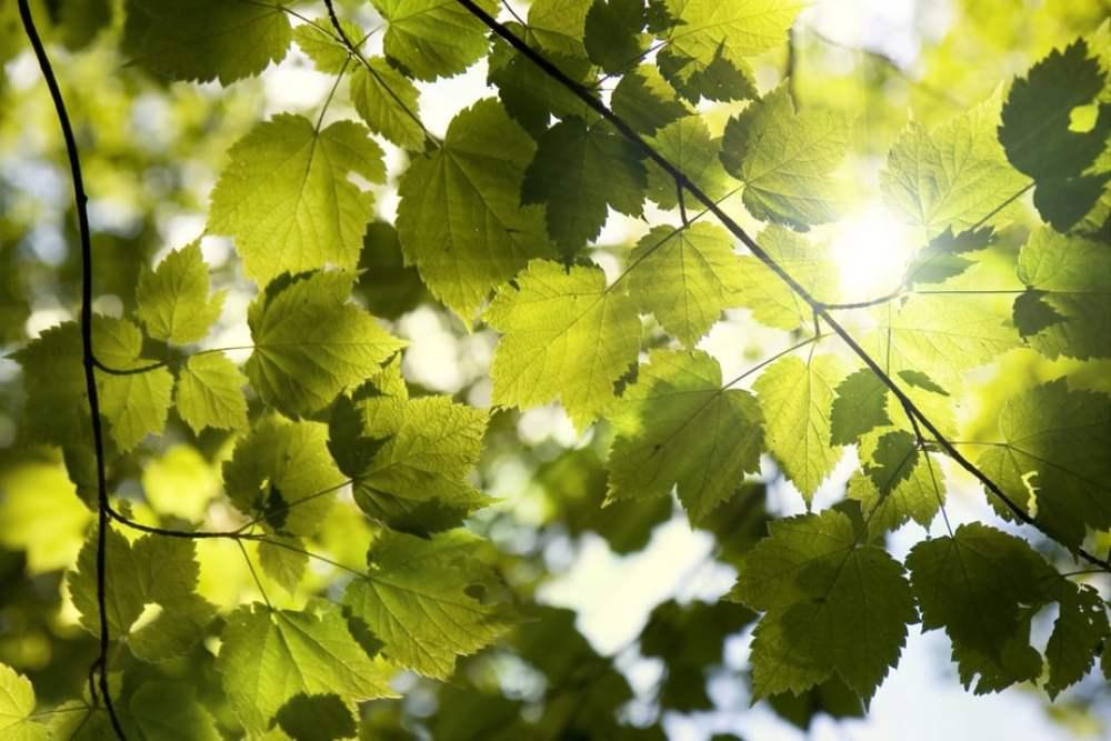 Licht im Schatten, Grüne Oase, Wohlfühlfaktor, Sonnenstrahlung, Klimaerwärmung mehr darüber lesen unter https://kristinahazler.com/heisse-tage-machen-schatten-begehrenswert/