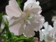 mässa vår trädgård 10
