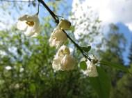 Alphems arboretum 2