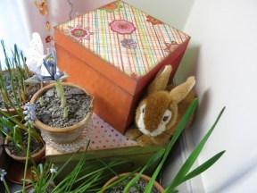 5 feb 15 trädgårdsbod trädgårdsrum vårblommor 5