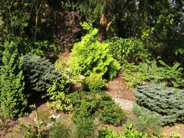 6 sep 14 trädgård IK 25