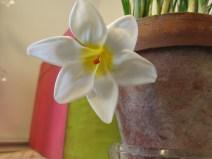trädgårdsrum trädgårdsbod vårblomning mars 5