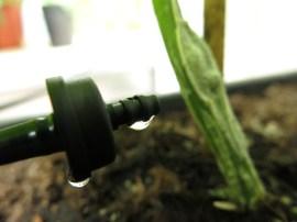 12 juli 15 bevattning irregatia växthus