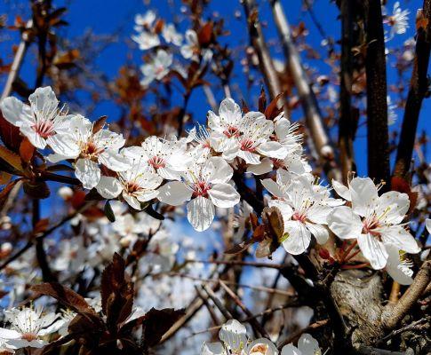 Frühling lässt sein blaues Band…
