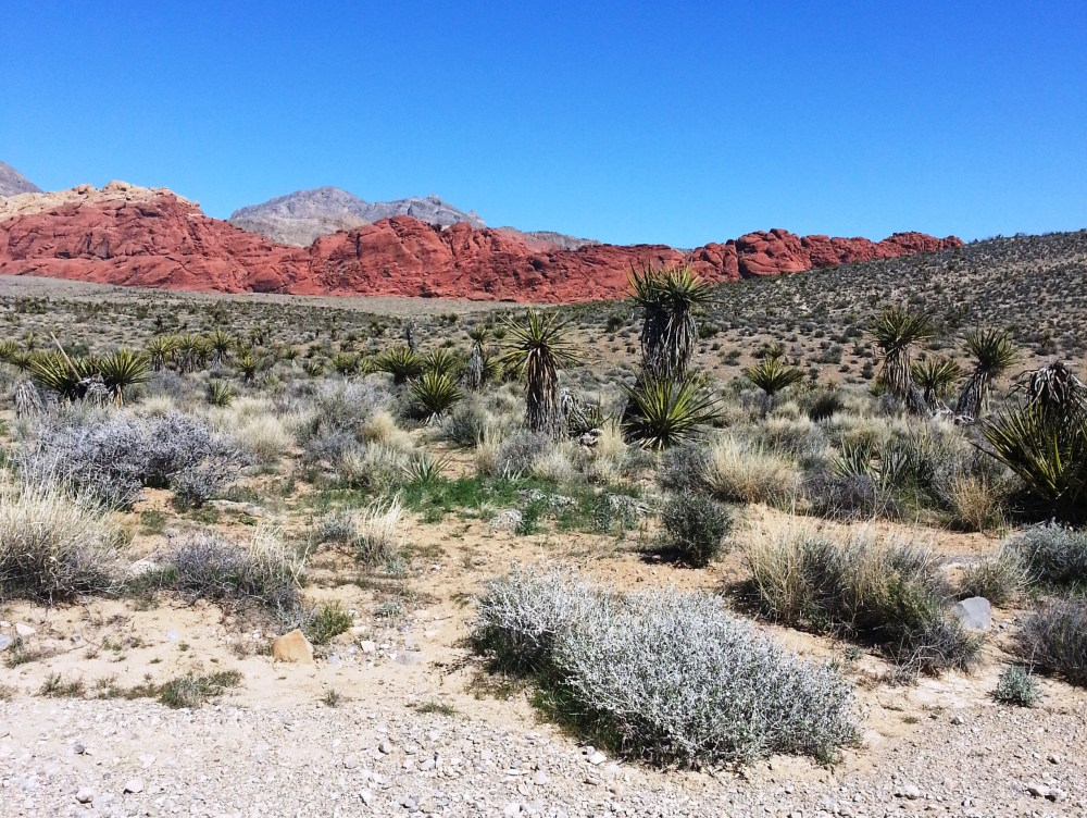 1st Time Solo Hiking Red Rock's Moenkopi Trail & Accidentally Beyond! (NV) (6/6)