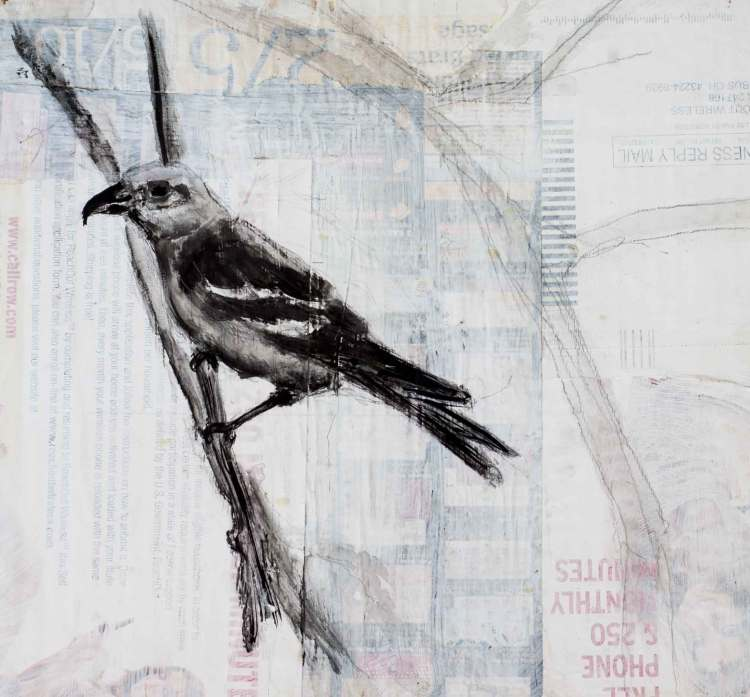 """White-winged crossbill painted with charcoal, ink. In the background you can see junk mail showing through a wash of gesso. Most prominent  text is """"Free Phone S 250 Monthly Minutes"""" and """"Business Reply Mail"""""""