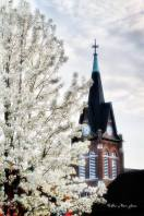 Tree in blossom with church steeple in background