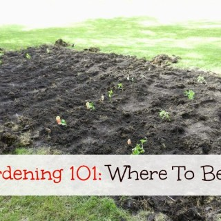 Gardening 101: Where to Begin