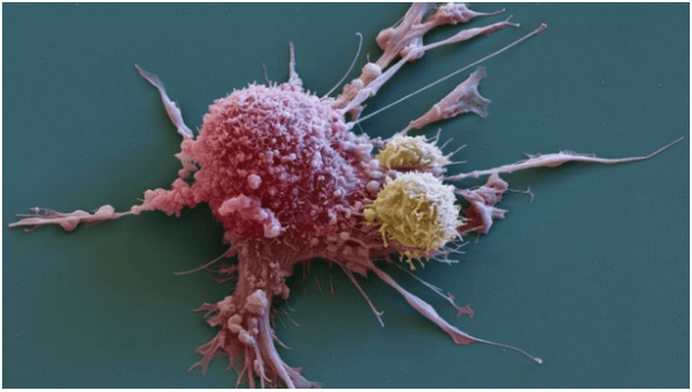 T cell overtaking a cancer cell