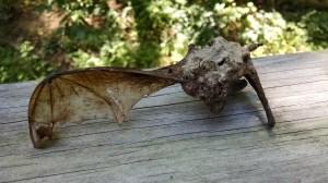 Bat 12
