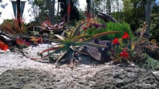 4-11-14 SeaWorld Plants.jpg