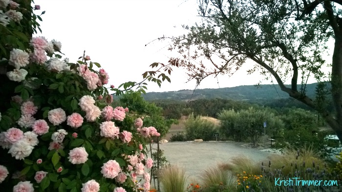 Croad Vineyards - The Rose View