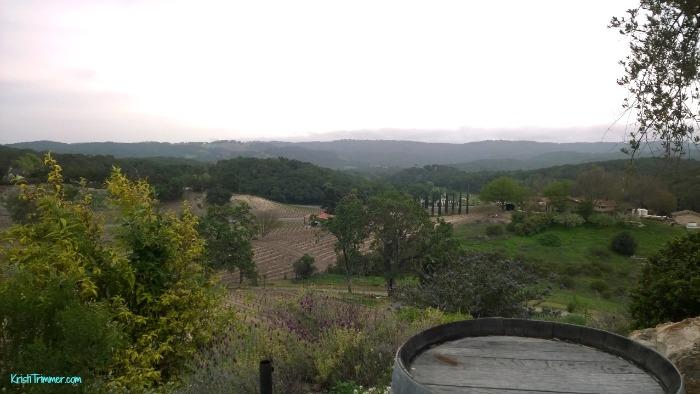 Croad Vineyards - The Vineyard View