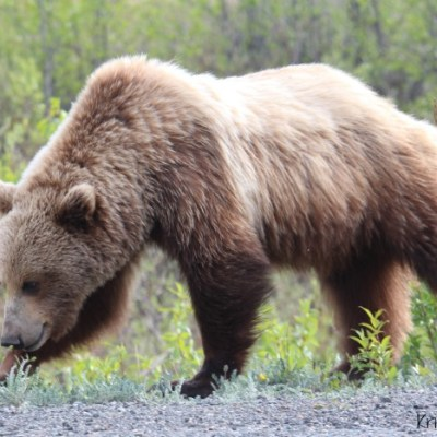 Talk Tuesday: Bear Love & Safety