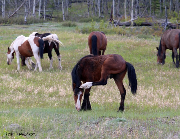 6-4-14 Wild Horses