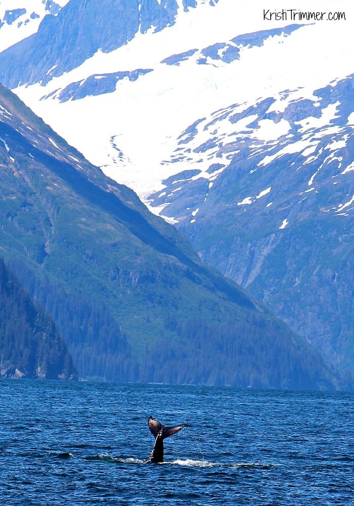 6-8-14 Alaska - Humpback Whale