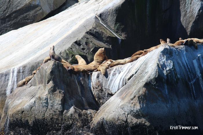 6-8-14 Alaska - Sea Lions