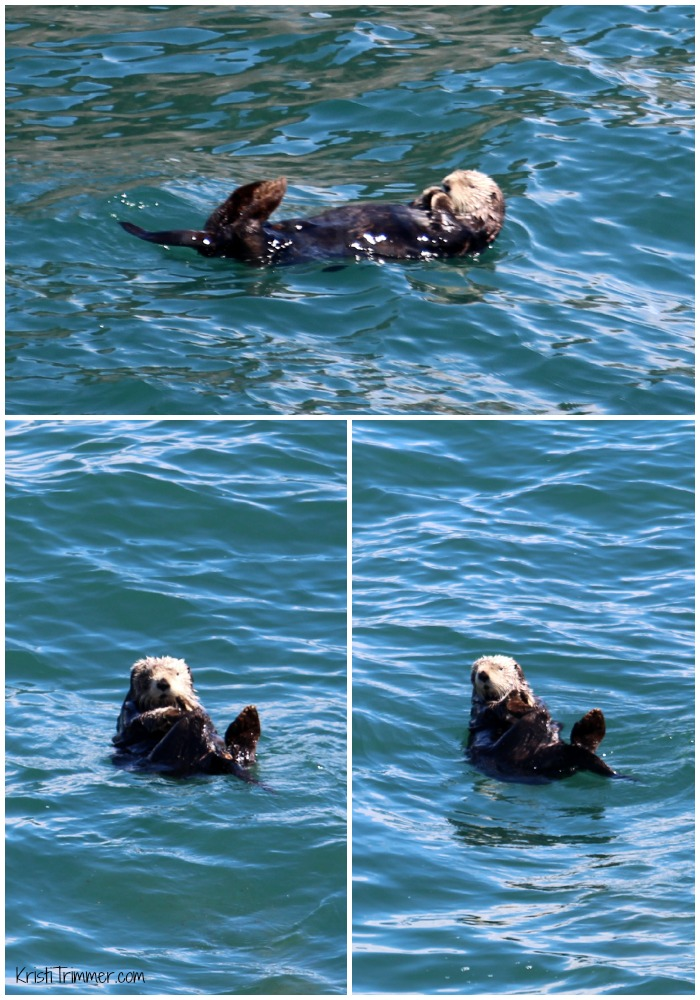 6-8-14 Alaska - Sea Otters
