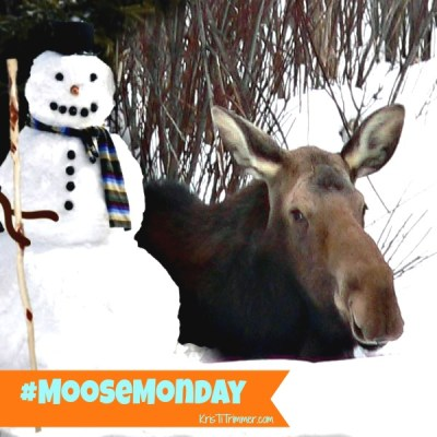 Moose Monday – Snow Day!