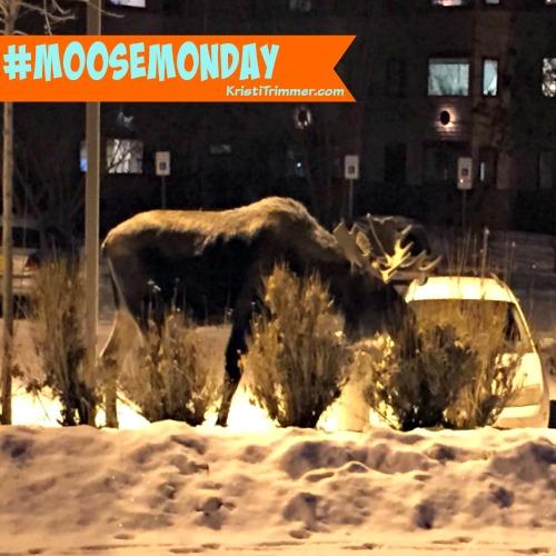 Moose Monday At Apt - 1
