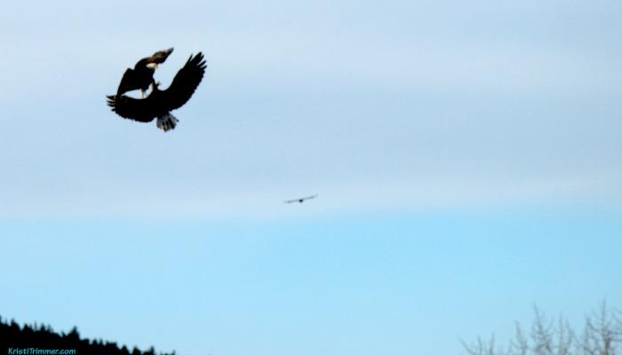 3 Eagles - Mama