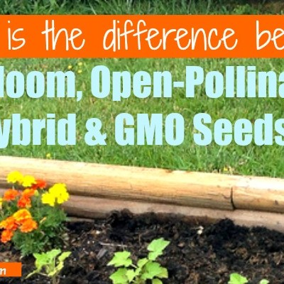 What is the difference between Heirloom, Open-Pollinated, Hybrid and GMO Seeds?