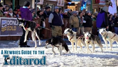 Newbies Guide to the Iditarod #alaska #iditarod #dogmushing