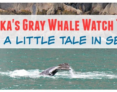 Alaska's Gray Whale Watch Tour: Catch a Little Tail in Seward