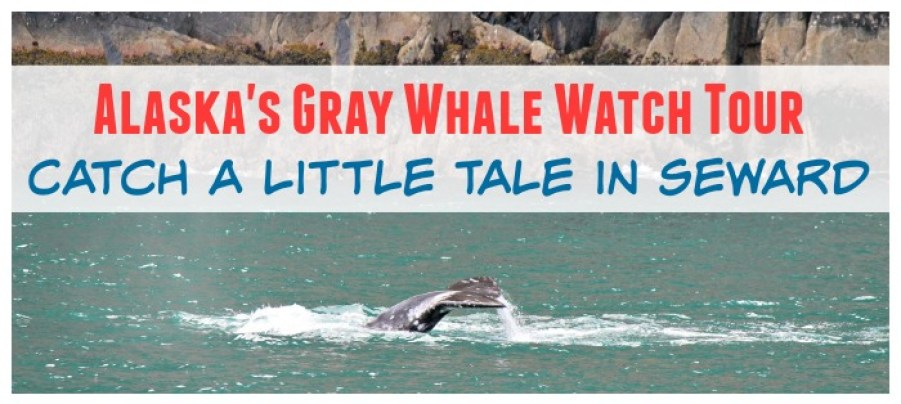 alaska whale watching tour
