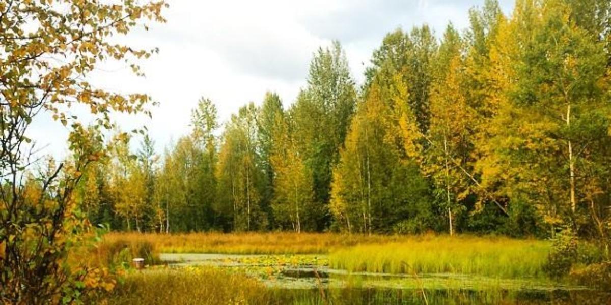 Baxter Bog Fall 2