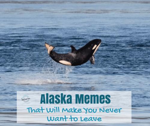46 Alaska Memes That Will Make You Never Want to Leave #alaska #alaskamemes #memes #funny