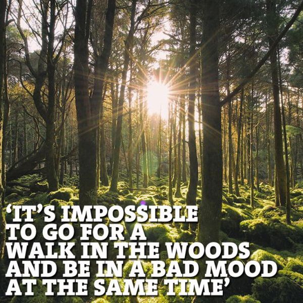 Walk in the woods and lift your mood. #truth #nature #naturelover #memes