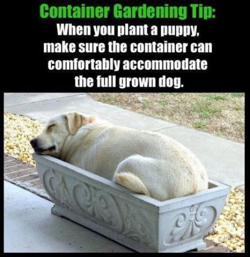 Container Gardening for Dogs