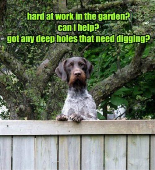 Dig Holes Meme