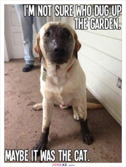 Garden Dog Meme