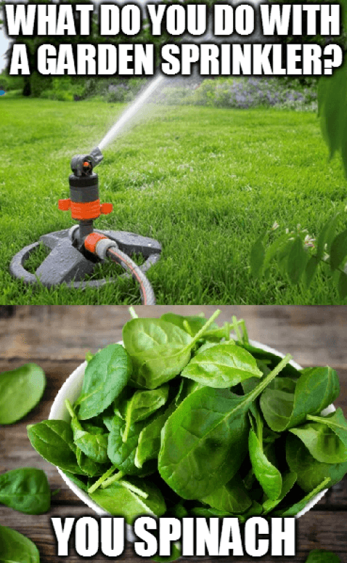 Garden Sprinkler Meme
