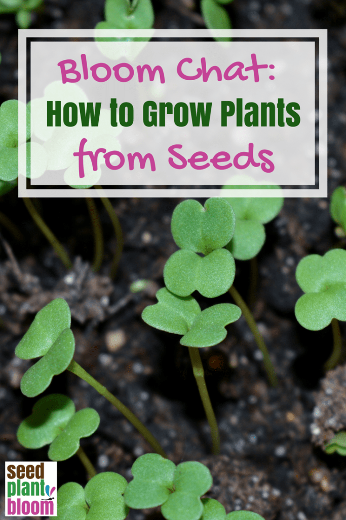 How to grow plants from seed, a step-by step guide